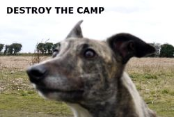 Destroy The Camp